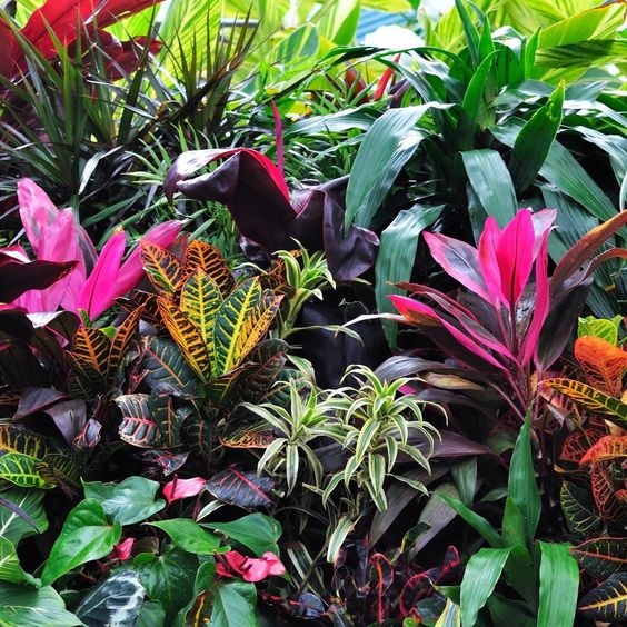 colourful foliage