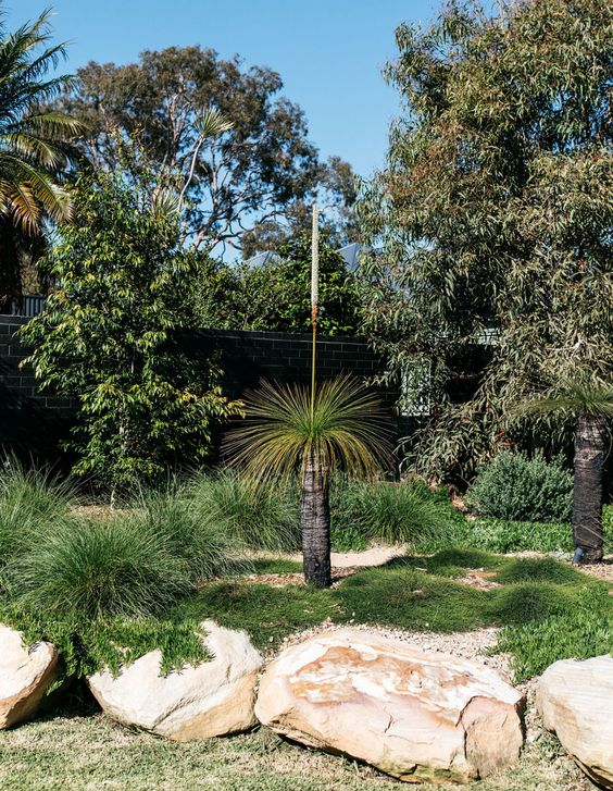 grass trees in native garden