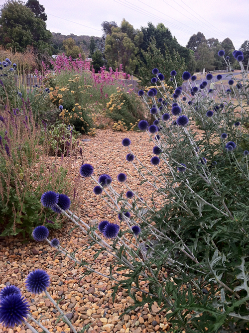 gravel and blooms