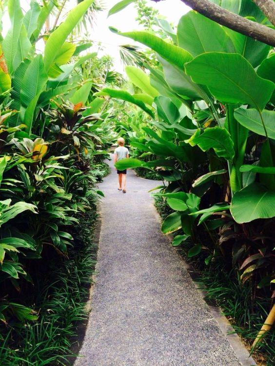 lush pathways