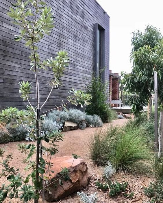 modern native garden