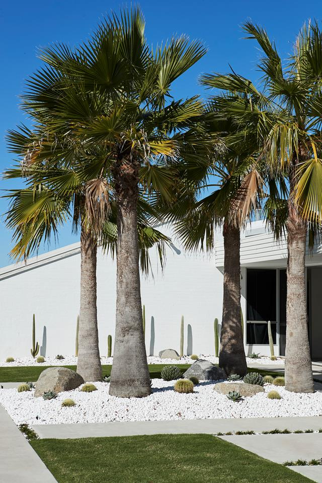 palms and cacti succulent garden ideas