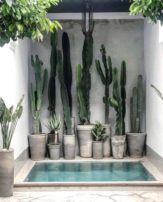 pool cacti
