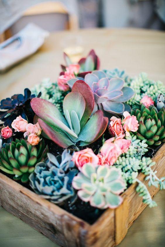 succulent garden ideas - repurposed containers
