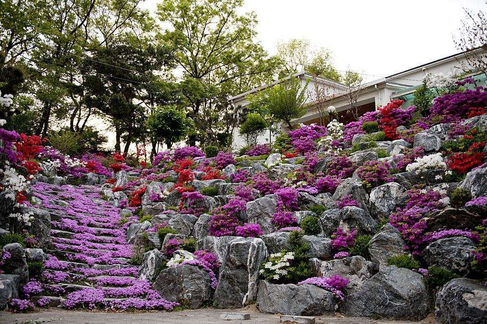 stone terrace with purple blooms