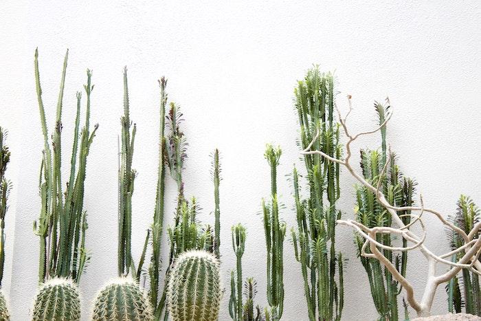 succulent-plant-garden