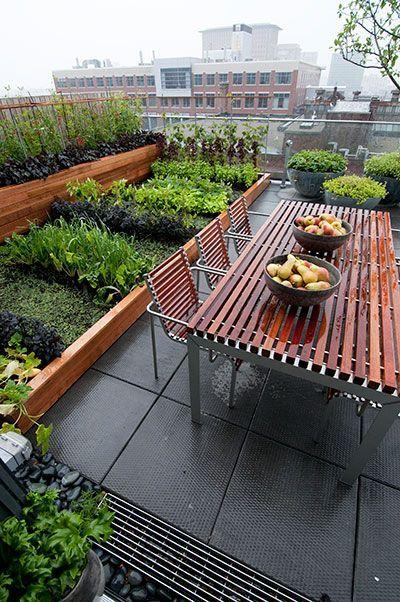 terraced vegie garden on a terrace