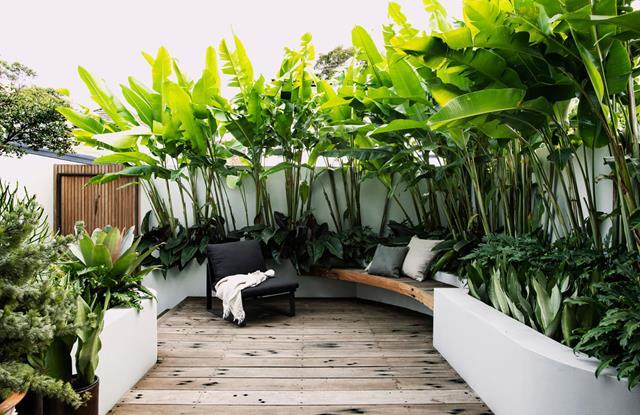 timber decking in tropical garden