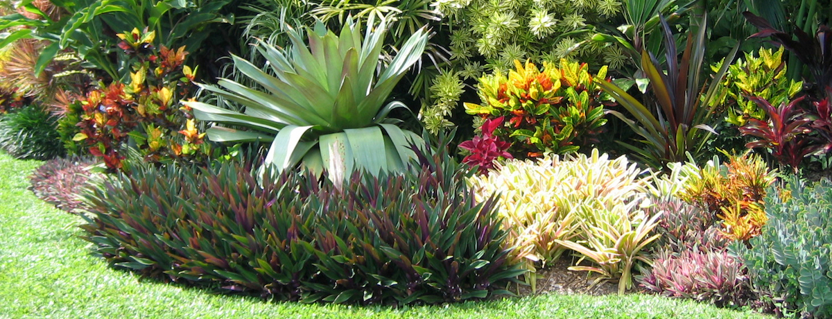 35 Tropical Garden Design Airtasker Blog