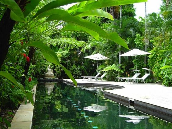 tropical poolscape