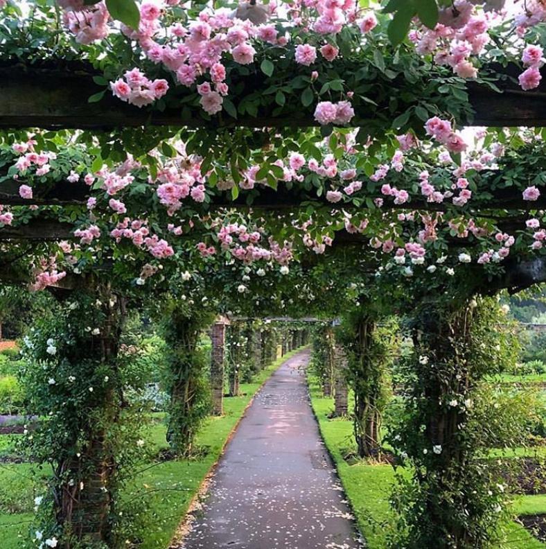 Engish garden