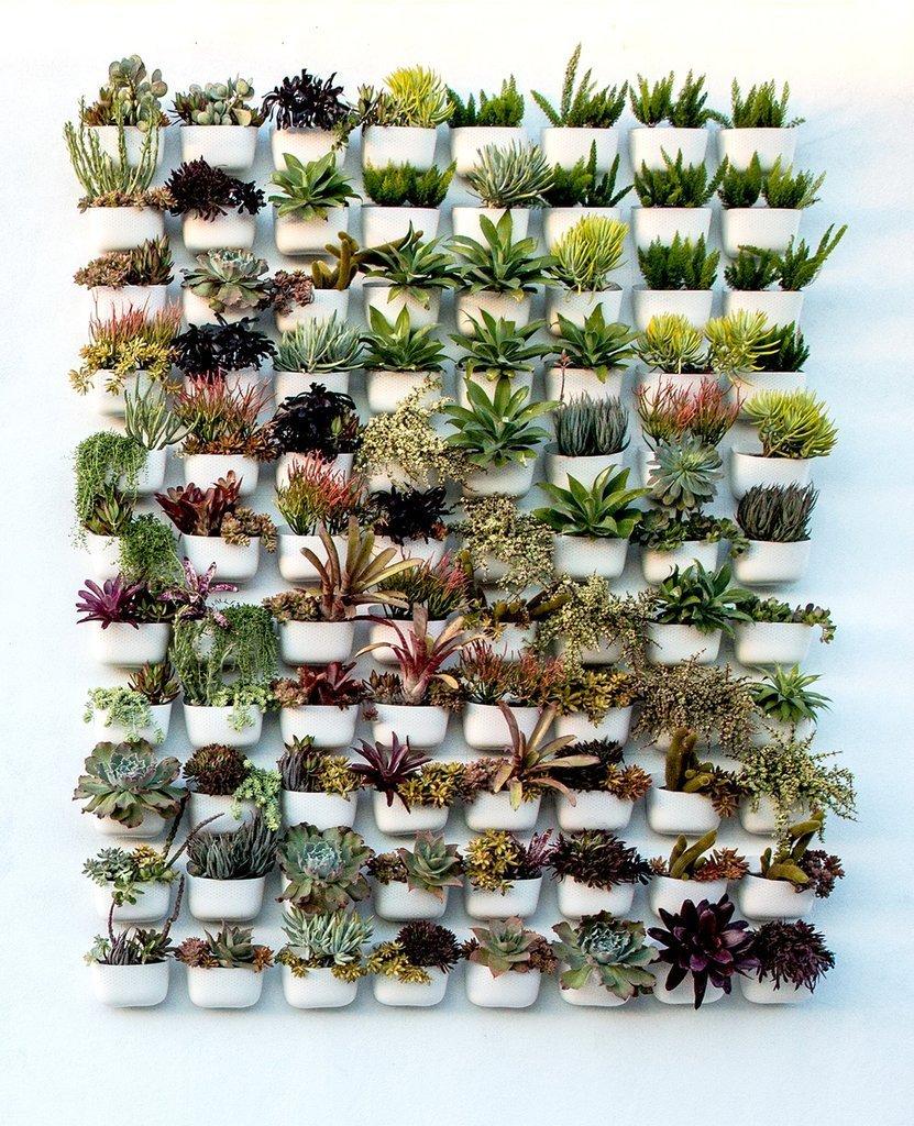 colour gradient of succulents