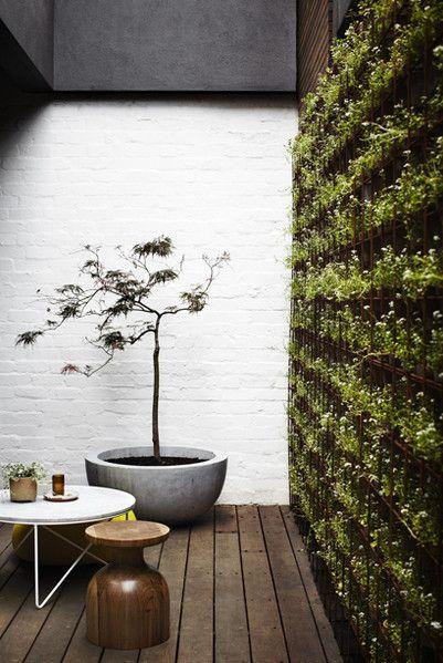 courtyard vertical garden