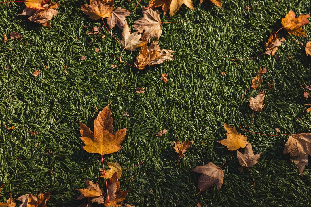 Fake-grass-with-leaf