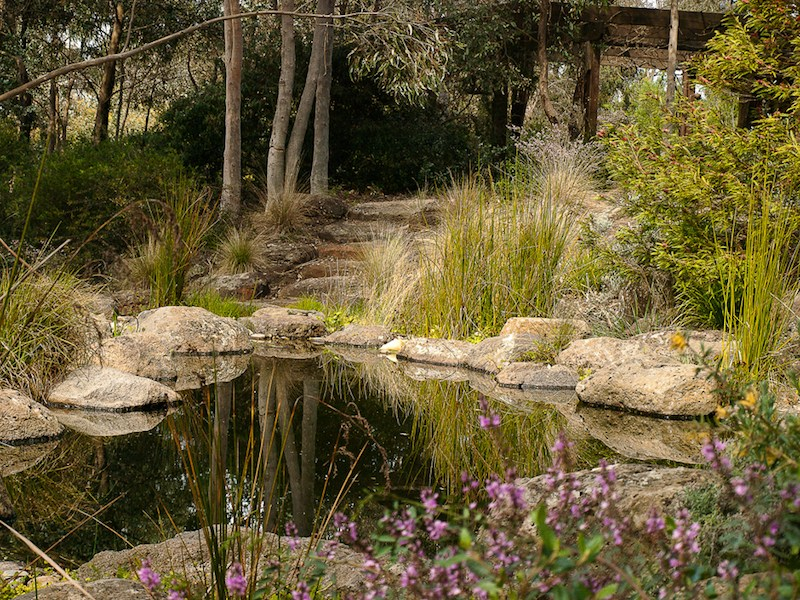 informal pool with native garden surrounds