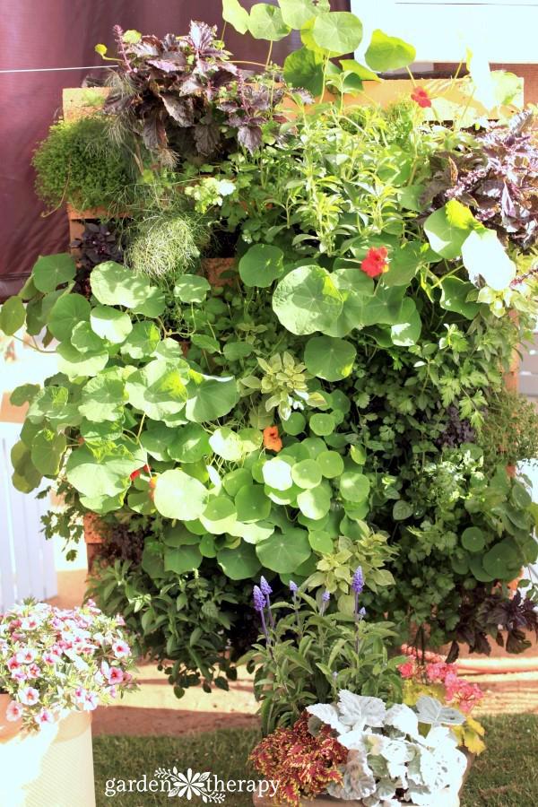 kitchen garden edible vertical garden