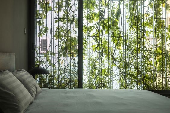 living green curtains