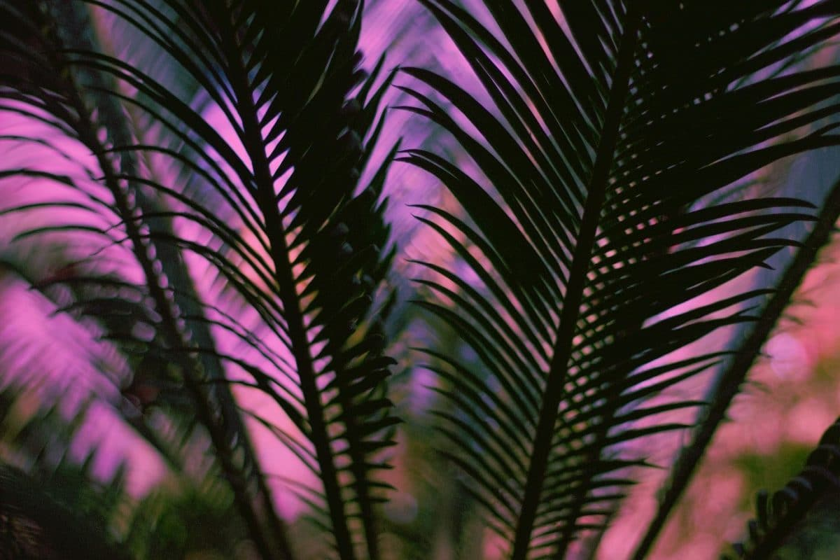 Designing a tropical garden: tropical garden ideas
