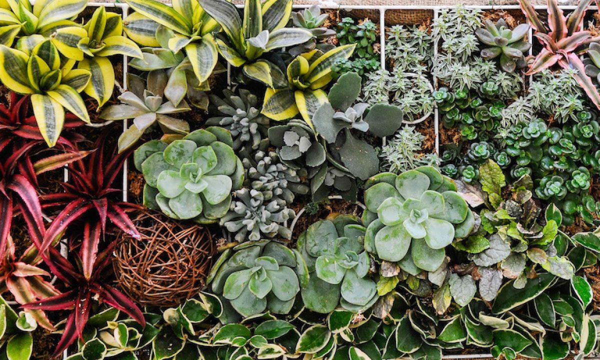 35 Vertical Garden Ideas Herbs Succulents Vegetables And More