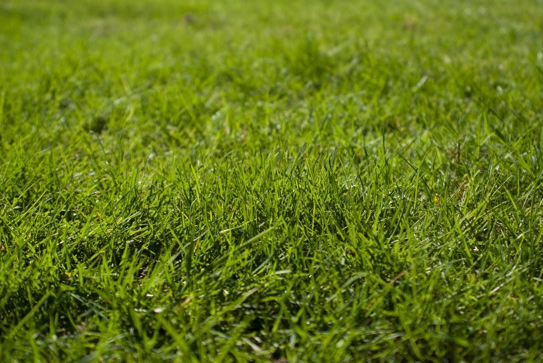 Wider shot of grass
