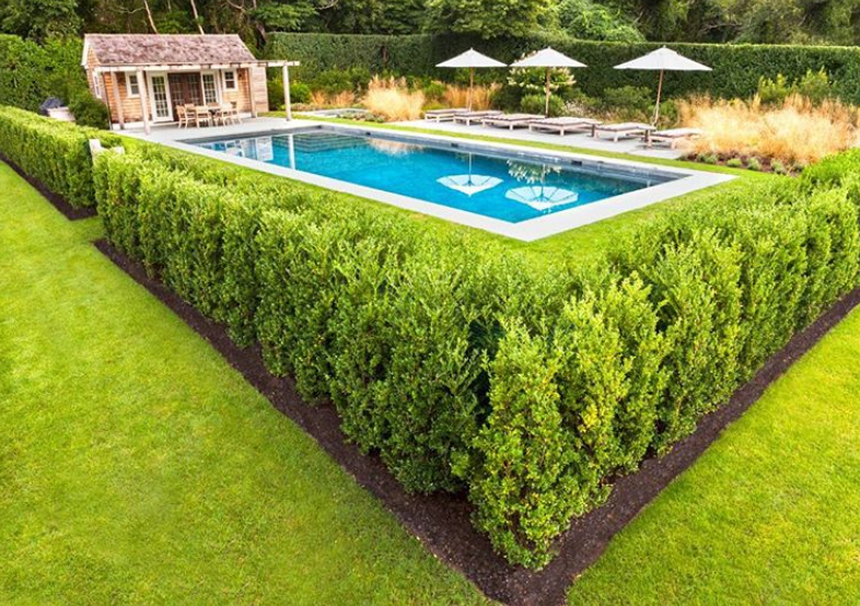 hedge pool fence