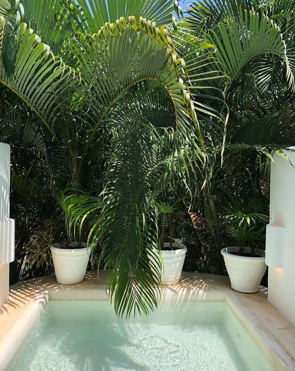 Small pool with potted plants