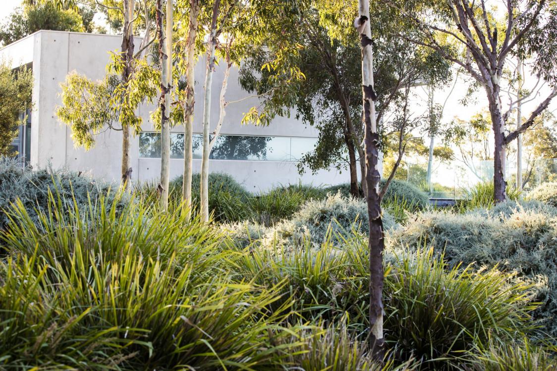 bush-landscaping