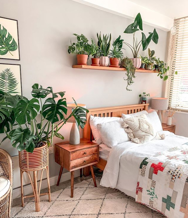 Bedroom plants