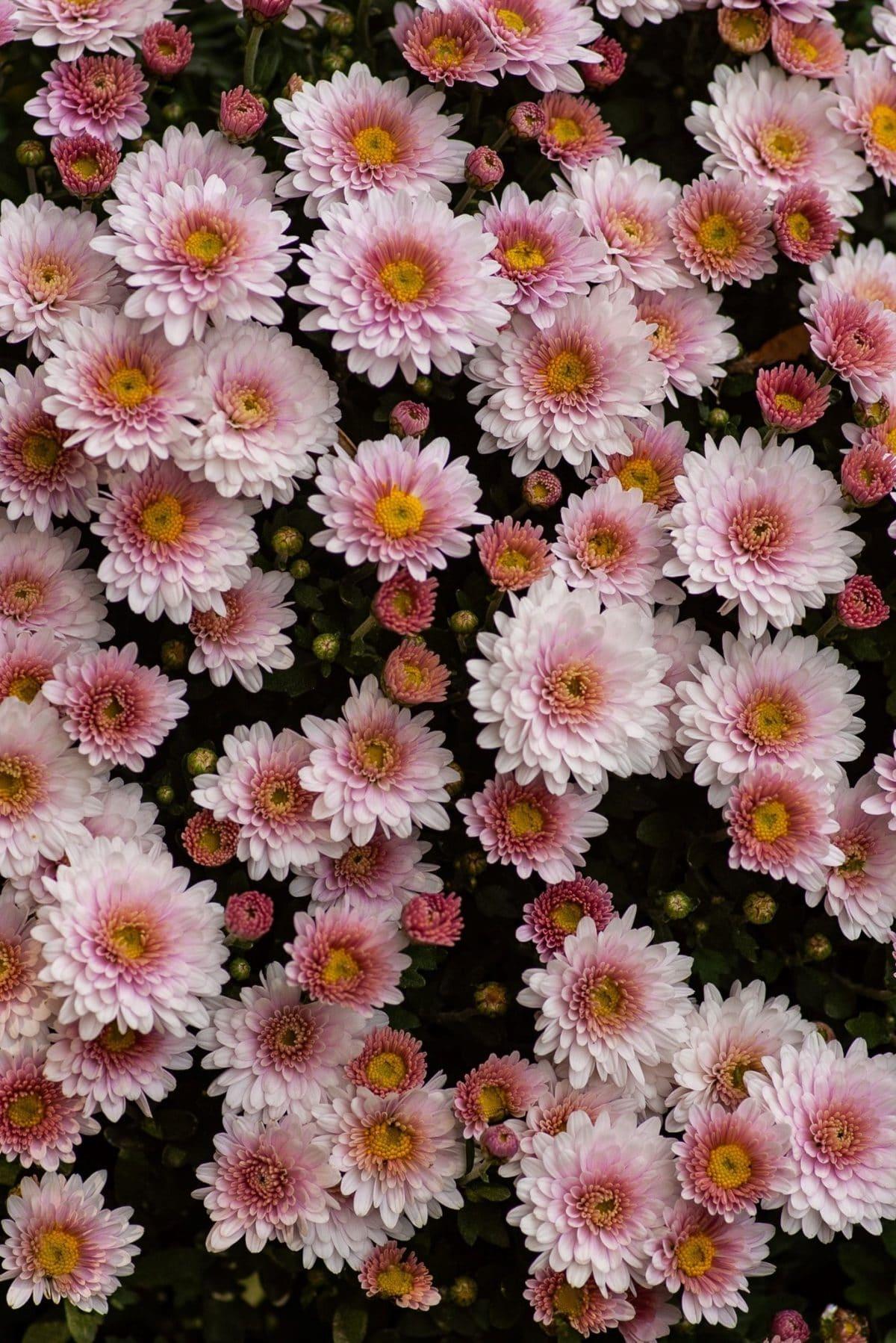 50+ Gorgeous garden flowers for your garden