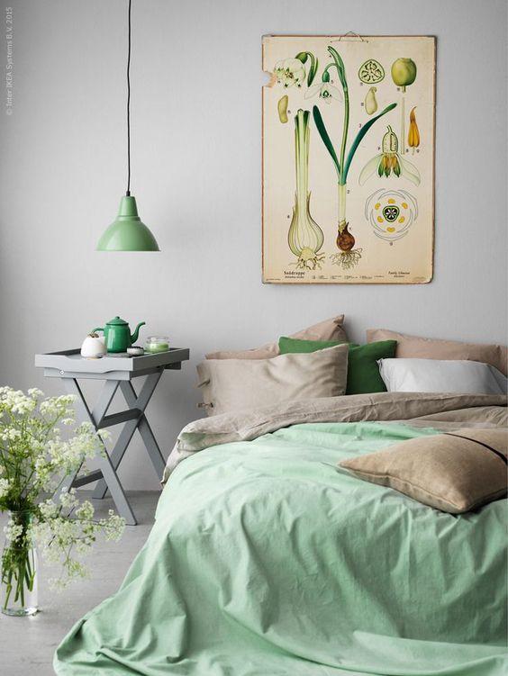 mint and botanical