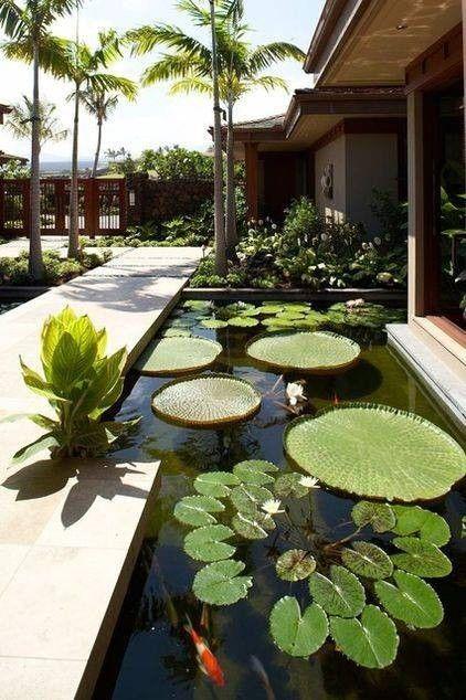 oversized aquatic plants