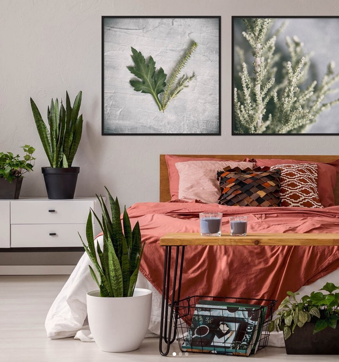 moroccan bedroom plants