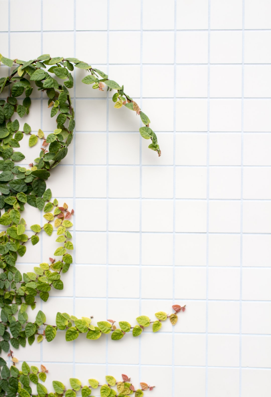 White tiles with a plant