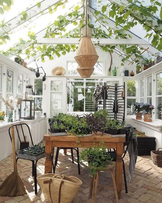 grow vines in conservatory roof
