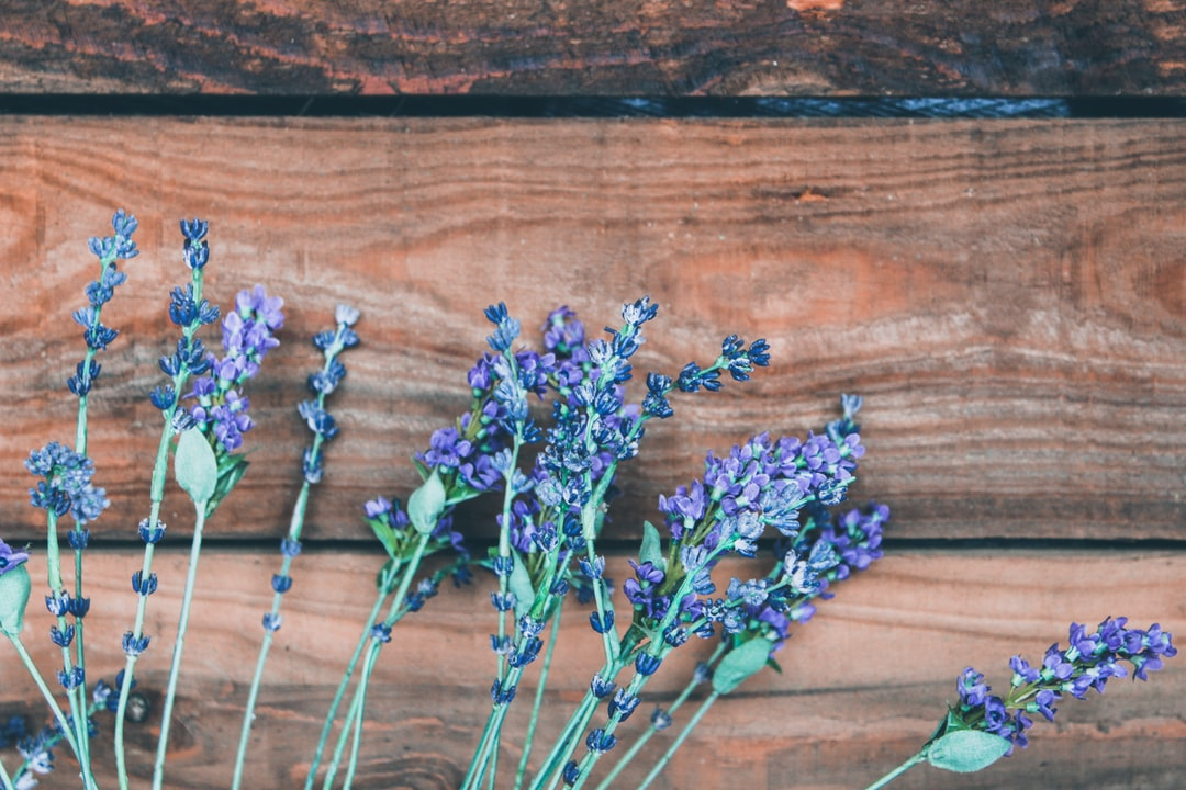How to prune lavender to keep it growing