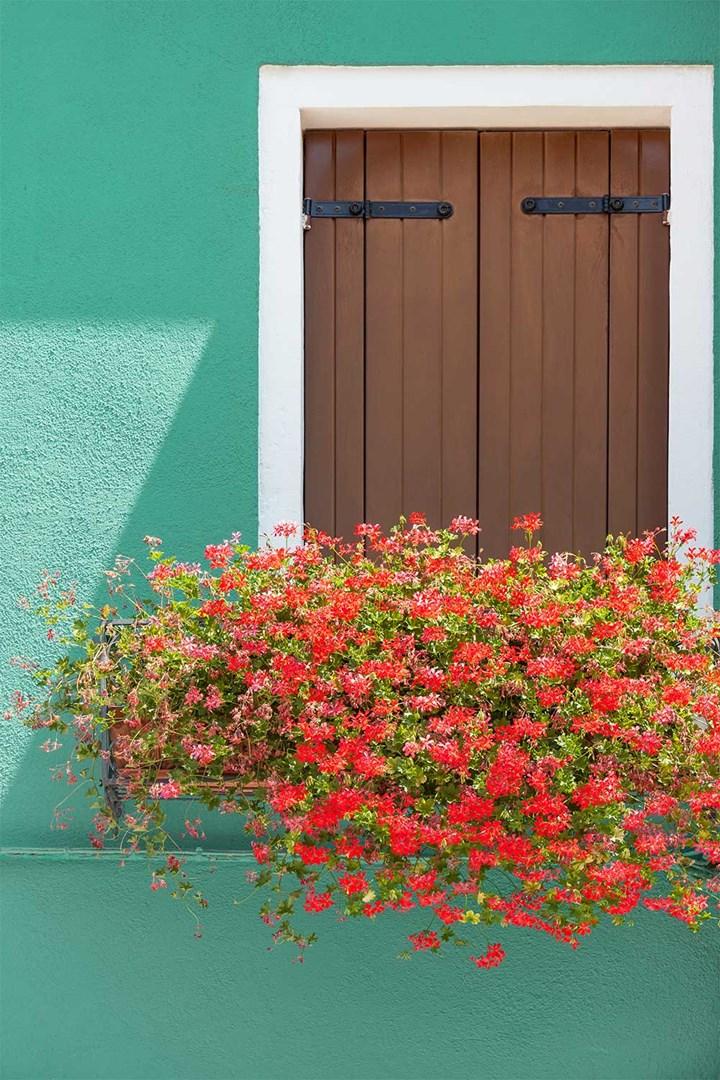 minimal window box with geraniums
