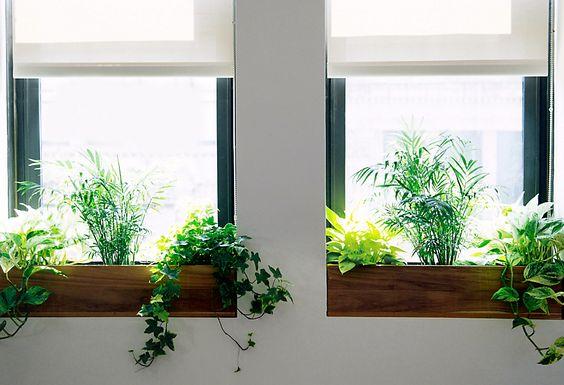 modern window box ideas