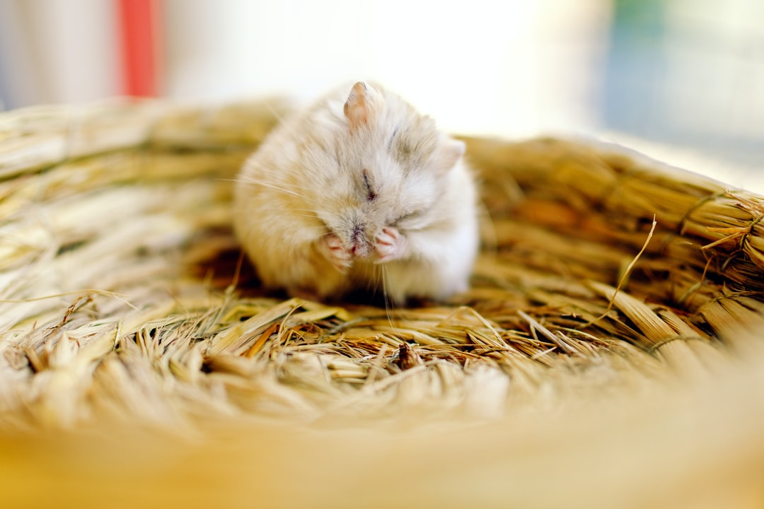 Mouse in a basket