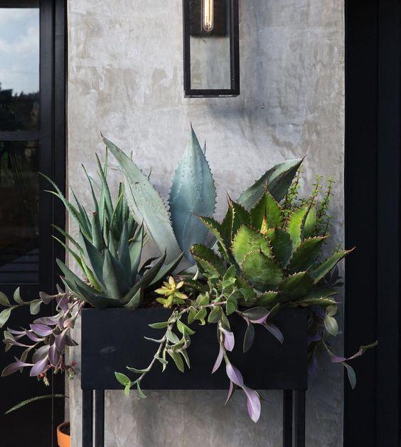 succulent raised planter