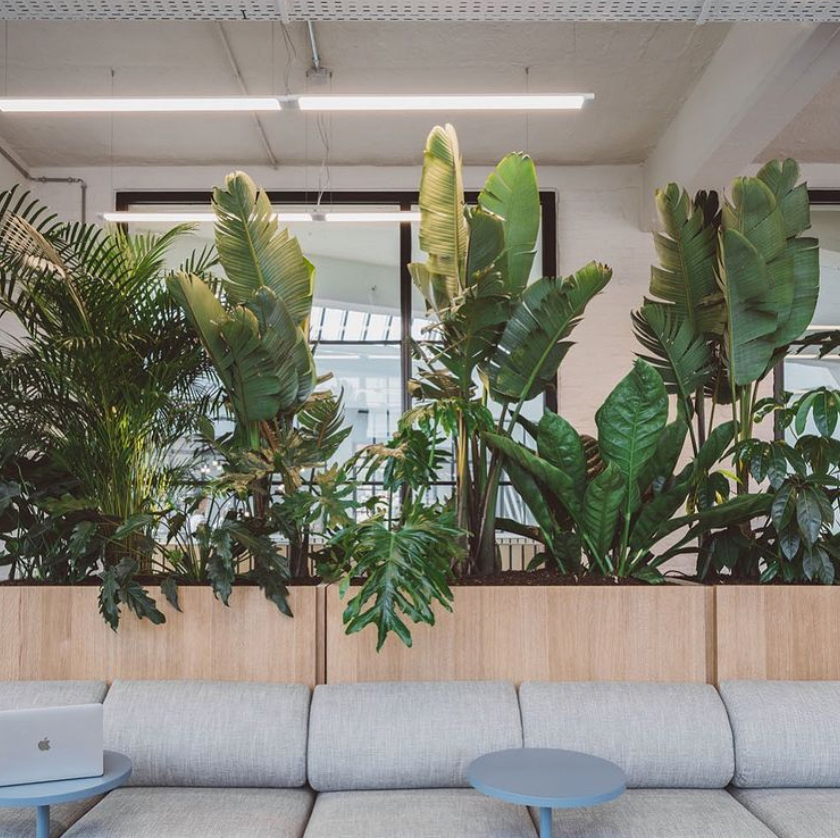 Using plants as room dividers