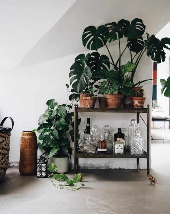 home bar cart with plants