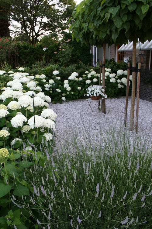 hydrangeas and gravel