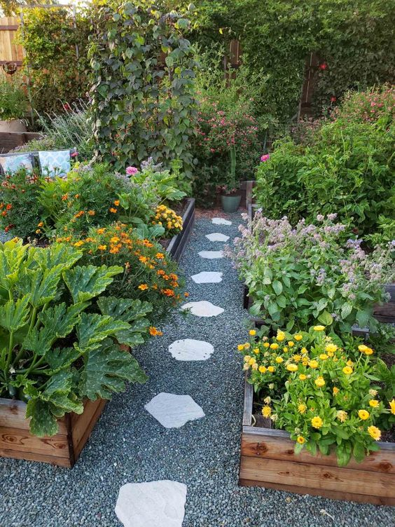 companion planting in allotment garden