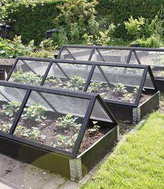 mini greenhouses in allotment