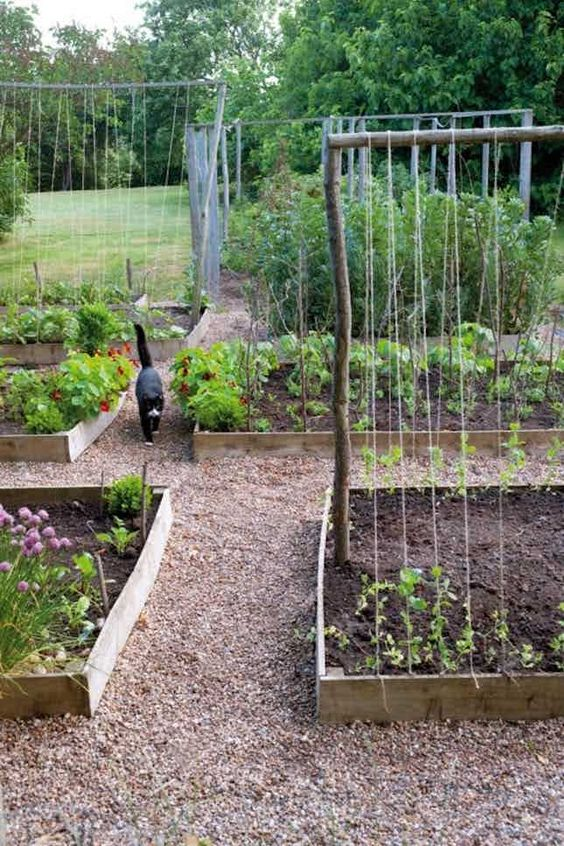 raised beds allotment