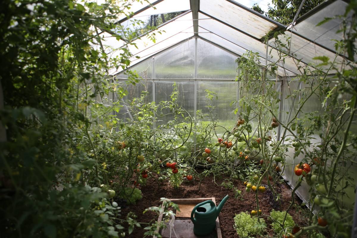 garden allotment greenhouse