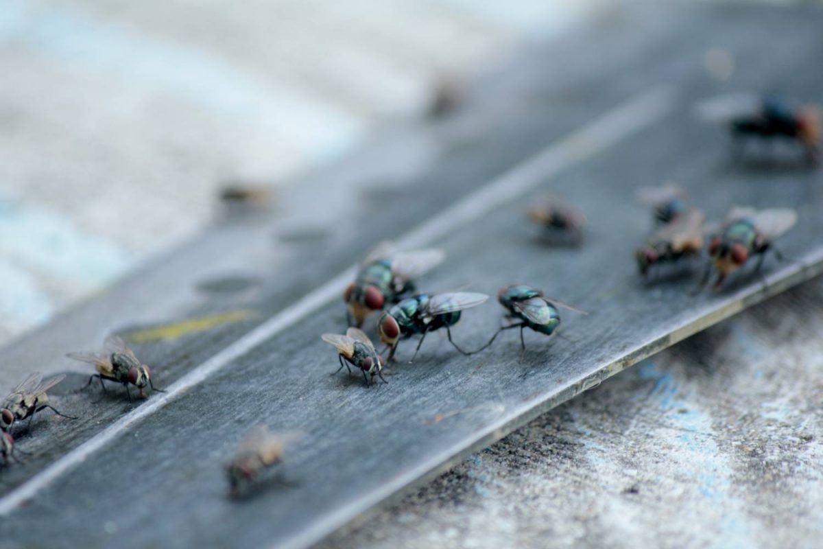 How to rid your home of pests with an effective DIY fly trap