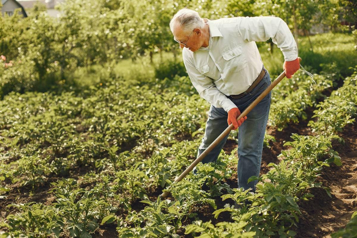 elder gardening