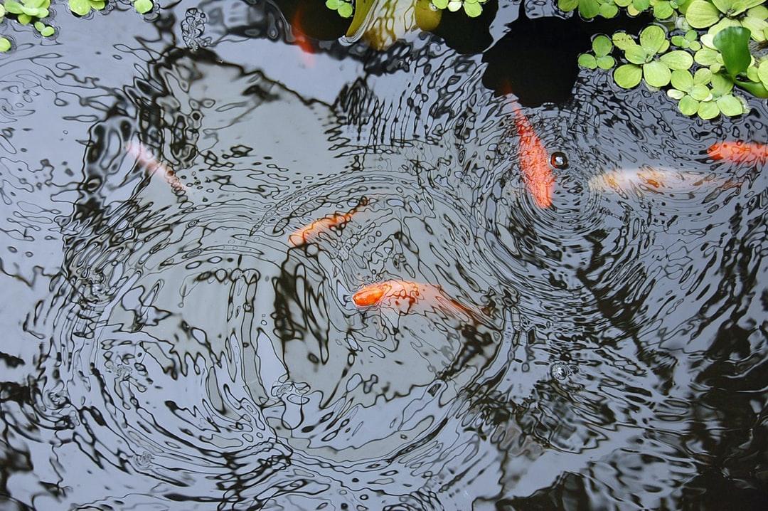 DIY pond filter media