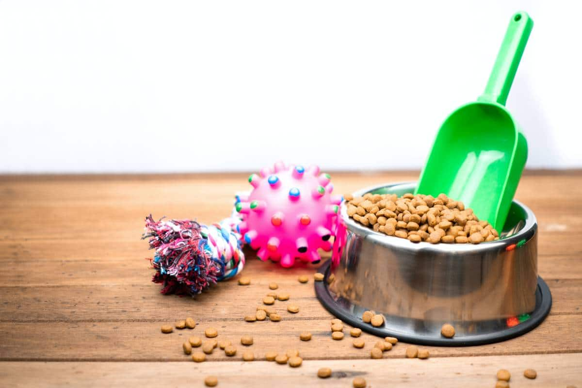 pet food on bowl and pet accessories
